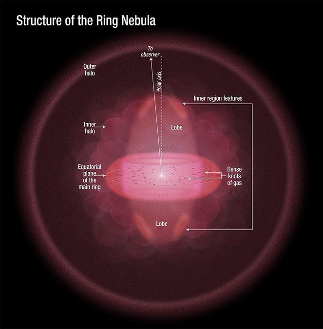 Ilustrasi ini menggambarkan pandangan dari samping Nebula Cincin, sebagaimana disimpulkan oleh para astronom menggunakan pengamatan Hubble. Fitur yang berbentuk donat di tengah gambar adalah cincin utama. Lobus atas dan bawah cincin terdiri dari struktur berbentuk bola yang menembus cincin. Padatnya gas knots tertanam disepanjang tepi cincin. Gambar dirilis 23 Mei 2013.