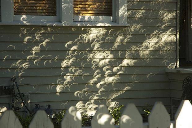 Menggunakan proyeksi bayangan pohon sebagai salah satu cara mengamati gerhana Matahari. Sumber : Petapixel.com